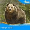 Сибирь (Авиа)